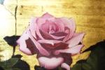 fiore-5
